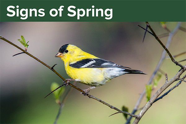 Signs of Spring Card
